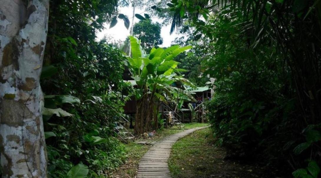 The path to the bungalow in Taricaya